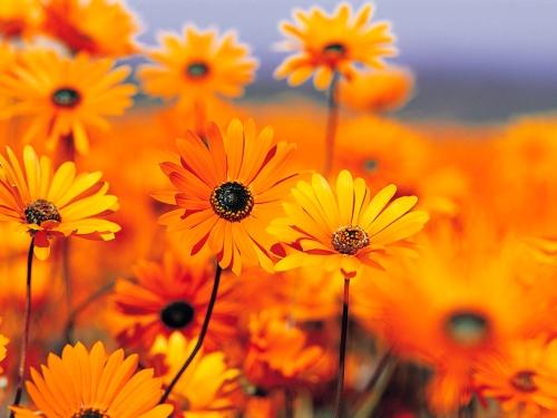 bloemen voor de vrwijwilligers