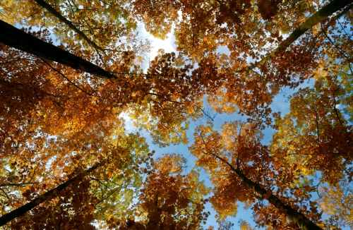 brown leaves of a tree under blue sky